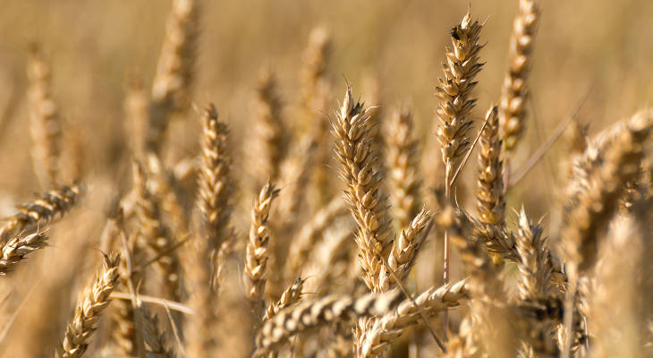 The commissioning of a new wheat-based starch factory in Hungary may change the game in central and eastern Europe.