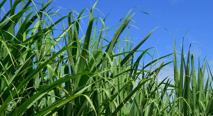 Uganda's crop isn't shaping up as originally though, which is in turn pushing Kenyan prices sharply higher.