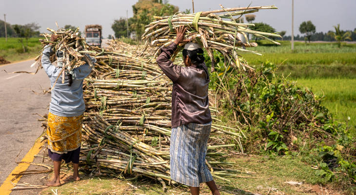 A new government means a new chance to end the cycle of sorrow in India's sugar market.