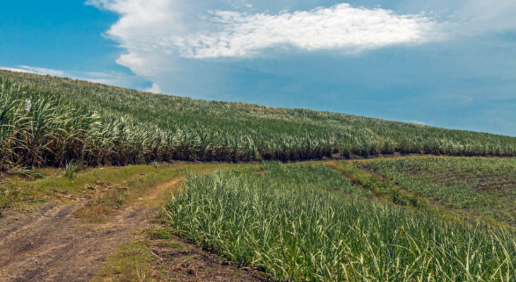 Eastern African sugar markets are shifting under the weight of a tighter world market.