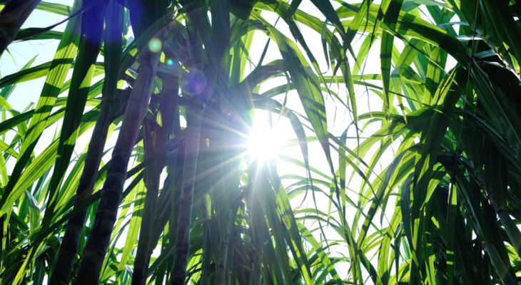 China's sugar crops are responding well to beneficial weather, but imports continue to raise questions for the market.