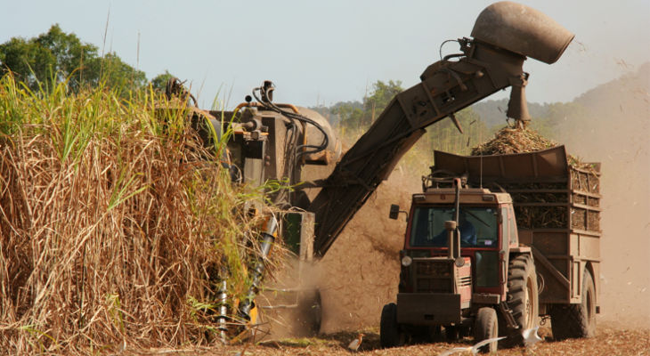 Rain has helped the Thai crop, but only in some areas, while the Australian crush is more than half-way finished.