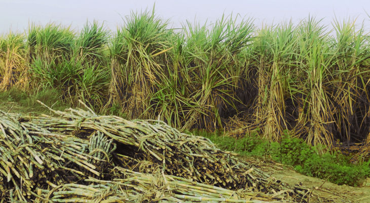 Despite the opportunity to finally reform cane price policy thanks to high sugar prices, states are looking to hold on to voters during the upcoming election instead of getting the industry on a stable footing.